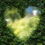 Piękny ,a także schludny zieleniec to zasługa wielu godzin spędzonych  w jego zaciszu podczas pielegnacji.