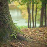 Przepiękny oraz {zadbany zieleniec to nie lada wyzwanie, przede wszystkim jak jego konserwacją zajmujemy się sami.